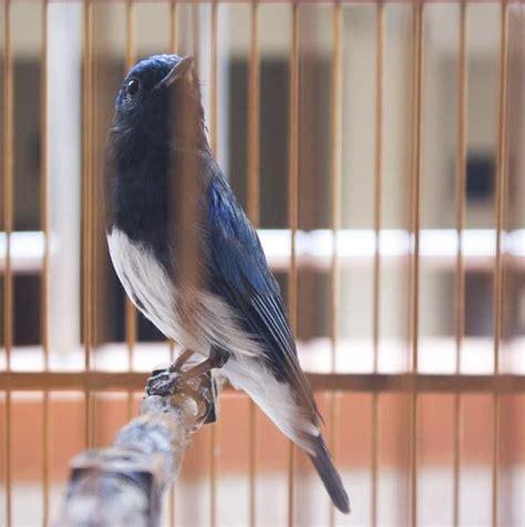 Stop Cacing Burung 30 Ml suara tledekan laut jantan gacor mp3 binatang peliharaan
