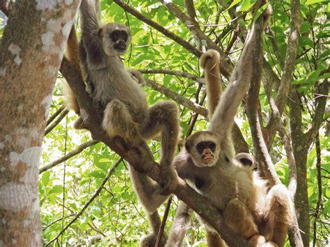 Monkeys to the Rescue | DiscoverMagazine.com