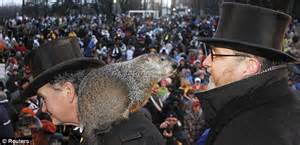 groundhog day of dallas groundhog predicts early as chicago and hit