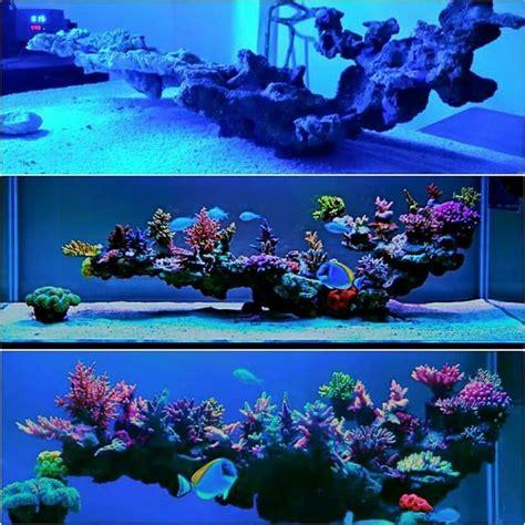 Zimmerpflanze Kaufen 711 by Die Besten 25 Nano Aquarium Ideen Auf Nano