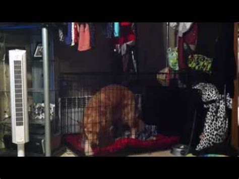 top paw dog house door dog escapes from his cage doovi