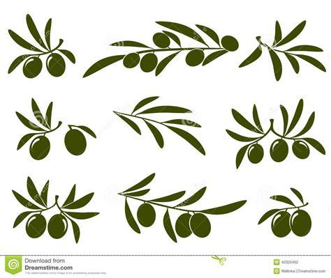 clipart vettoriali insieme ramo di ulivo illustrazione vettoriale