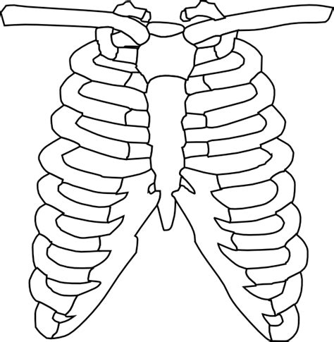 ribs clipart rib cage clip at clker vector clip