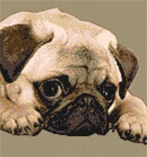 pug cross stitch patterns free 90 best images about s 233 pia animais on punto patrones and cross stitch