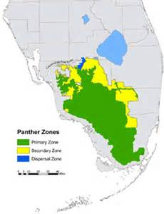 florida panther thinglink