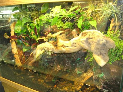 semi aquatic vivarium