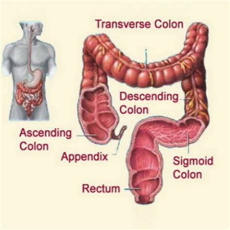 Detox Nausea Remedy by Colon Cleanse Home Remedy Treatments