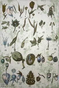 botanical print wallpaper seeds on botanical wallpaper photo page everystockphoto