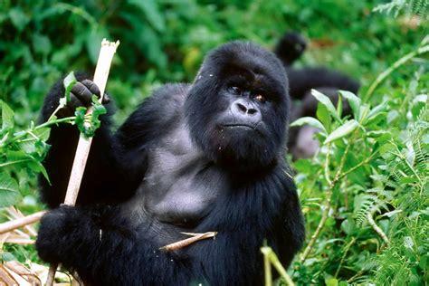 Critically Endangered Species List September 1, 2015 ...