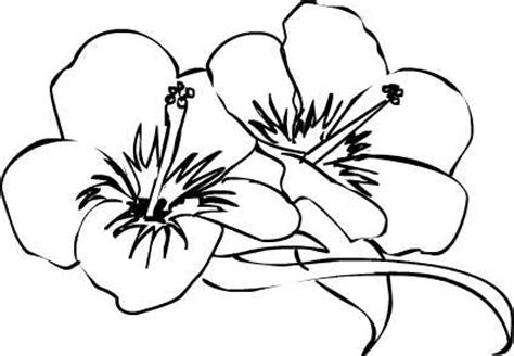drawings of hibiscus flowers clipart best