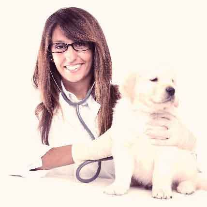 puppy vet visit cost neurological disorders and brain health petcarerx