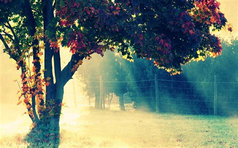 wallpaper hd tumblr beautiful tumblr wallpaper hd desktop wallpapers 4k hd