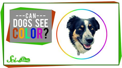 how do dogs see color can dogs see color
