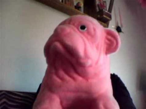 the pink pug pink pug