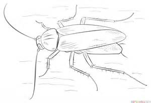 drawing of a cockroach how to draw a german cockroach step by step drawing