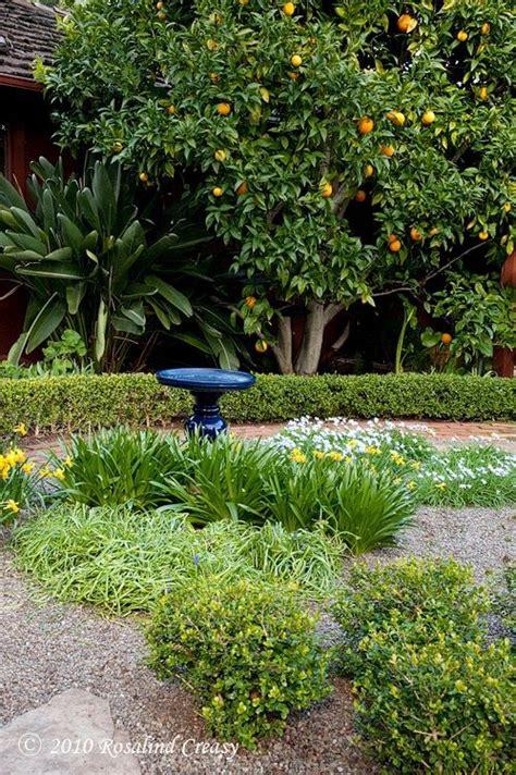 backyard lemon tree 1000 images about garden deco on pinterest trees bird