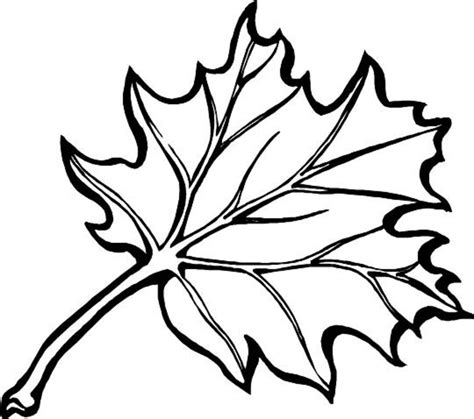 fall leaves coloring page printable leaves to color coloring part 8