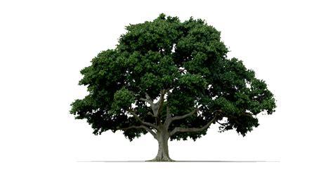 imagenes png naturaleza arboles imagenes png imagui png pinterest