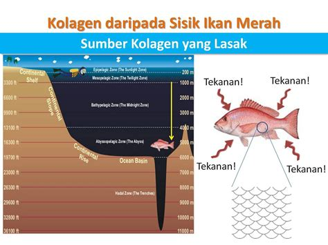 Collagen Shaklee Malaysia 9 perkara mustahak yang anda perlu tahu sebelum mencuba