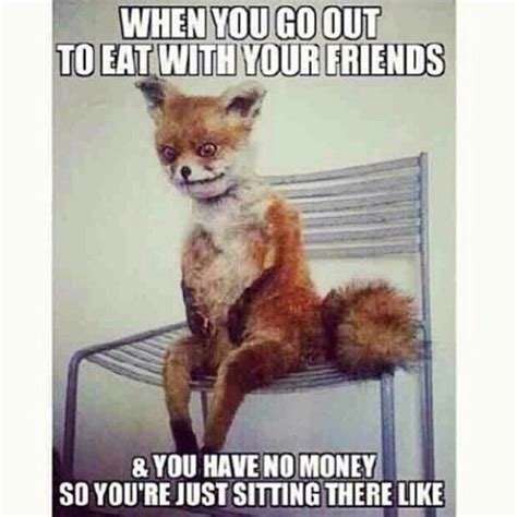 Fox Meme - these fox memes crack me up lol lol pinterest foxes