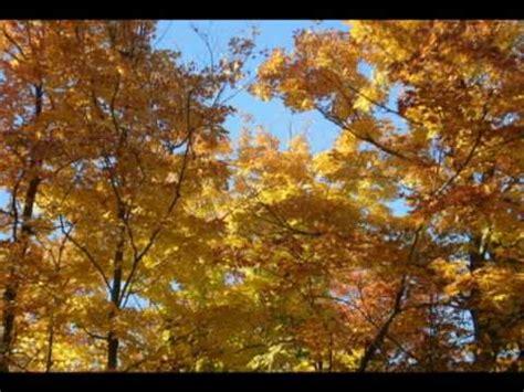 autumn leaves testo autumn leaves crash parallel musica e