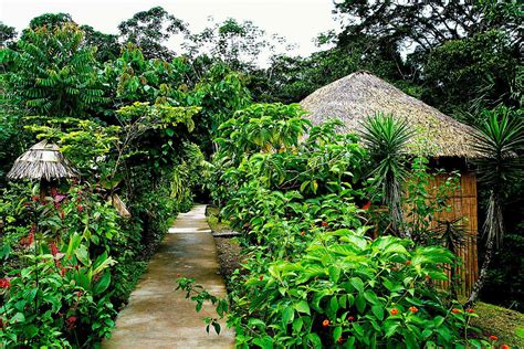 la selva la selva amazon eco lodge review amazon rainforest ecuador travel tips