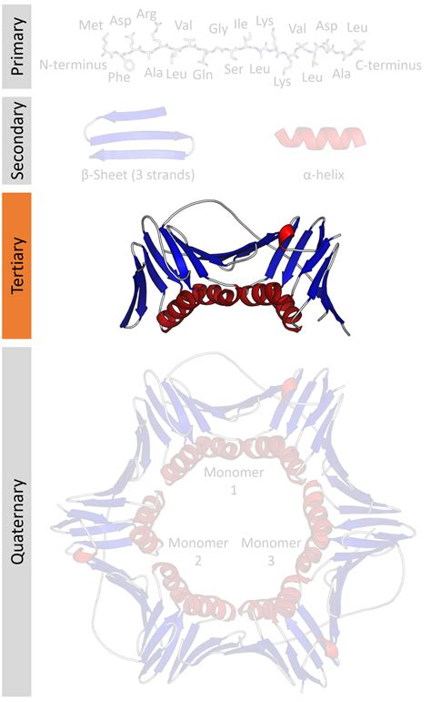 protein tertiary structure protein tertiary structure