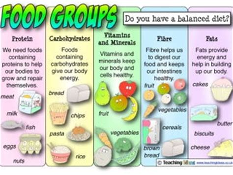 Classe Energie E 4969 by Science Animals Including Humans Food Groups Lesson By