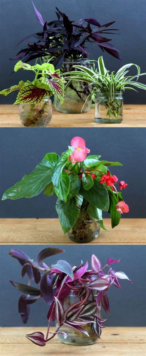Indoor Flower Garden Best 25 Indoor Plant Decor Ideas On Plants