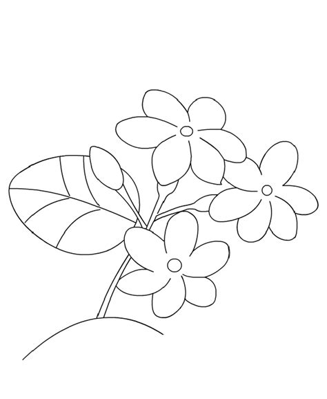 Coloring Pages Of Jasmine Flower | jasmine flower coloring pages coloring kids pinterest
