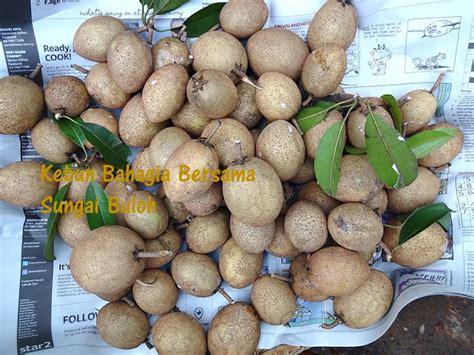 Calista Kotak Fresh Set Isi 3 Buah kebun bahagia bersama multiply nanas madu sabah