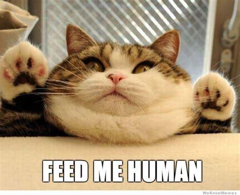 Fat Cat Heavy Breathing Meme - fat cat heavy breathing meme