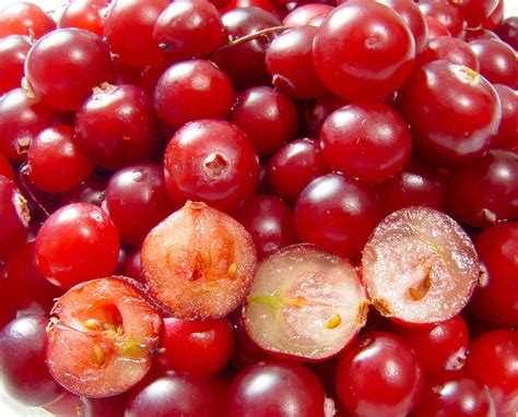 does cranberry juice prevent urinary tract infections clinical correlations