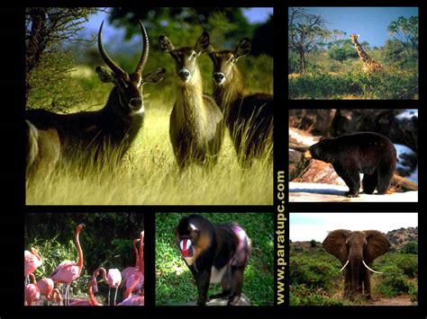 imagenes de animales autotrofos mas imagenes de animales