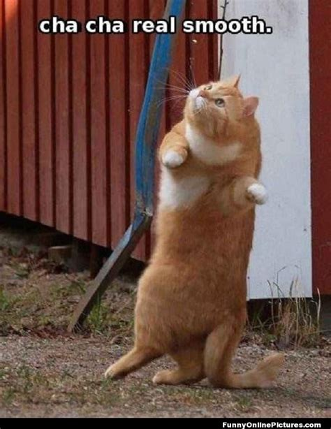 Dancing Cat Meme - funny dancing cat pic