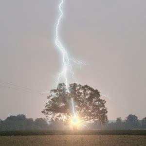 lighting tree tree lightning