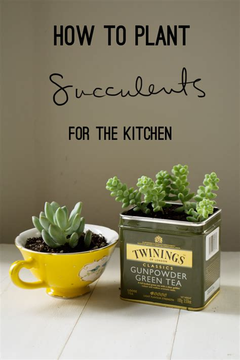planting succulents in recycled containers totally green crafts