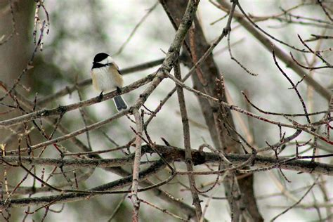 how you can help local birds survive the winter kawarthanow