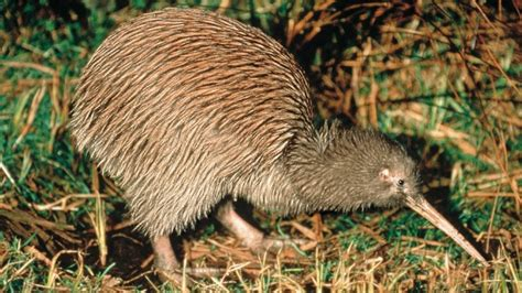 kiwi kiwi a flashpacking journey around new zealand books new zealand s nature and wildlife our top ten must see