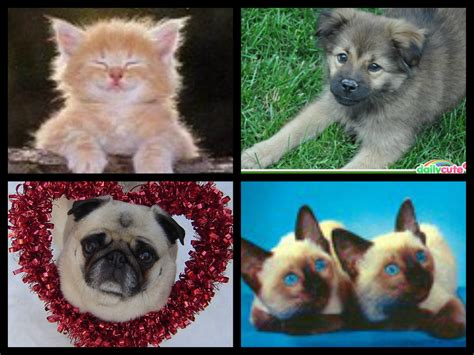 and puppies kittens and puppies animal humor fan 33898264 fanpop