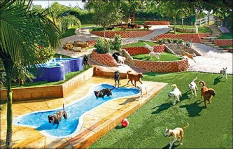 best dog for small backyard 나우뉴스 개들의 디즈니랜드 美호화 애견 호텔