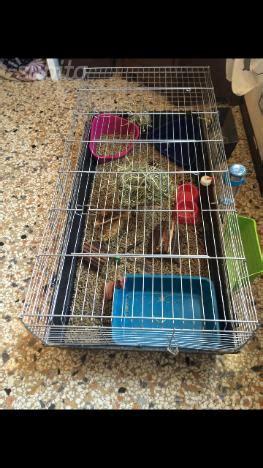 gabbia conigli usata gabbia per cocorite o altri uccelli posot class
