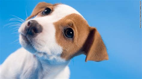 how to adopt a puppy how to adopt a great cnn