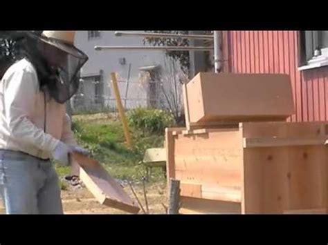 tanzanian top bar hive bee transferr to tanzanian top bar hive youtube