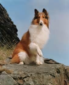 Lassie movie www galleryhip com the hippest pics