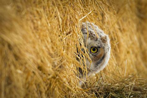 Utah Sweepstakes - dwr utah wildlife photo contest spring winners pictureline