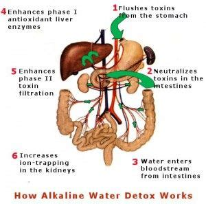 Alkaline Water For Detox by 106 Best Images About Benefits Of Alkaline Water On