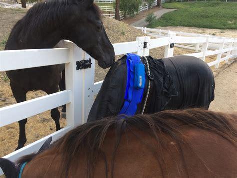 photonic light laser horse vital equine holistic