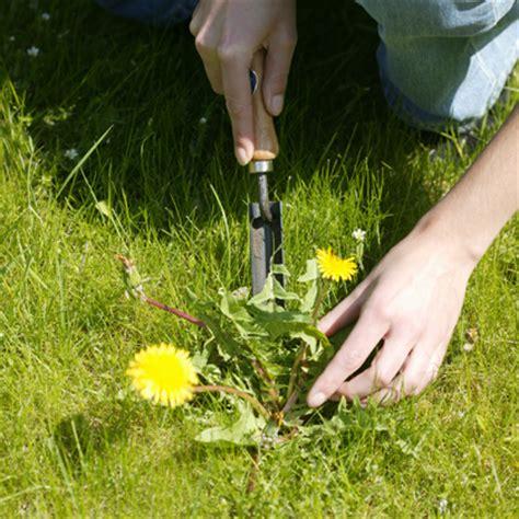 bloemen herkennen aan blad onkruid herkennen en bestrijden vtwonen