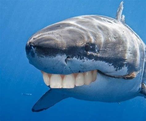 with teeth whale with human teeth